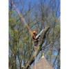 Art tree service - Tree / Stump removal